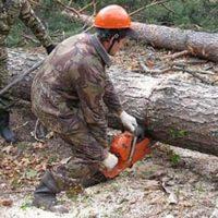 Собственная лесозаготовка
